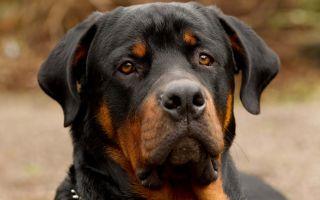 Какие собаки – злые?