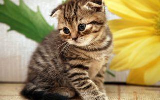 Какое обезболивающее можно кошке?