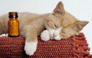 Распространенные болезни кошек: симптомы и лечение.