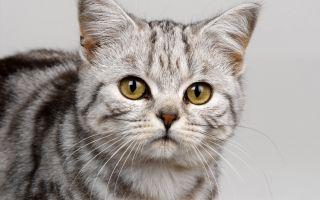 Какие прививки нужно делать кошкам?