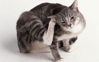 Как лечить блошиный аллергический дерматит?