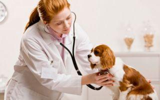 Самые распространенные болезни собак.