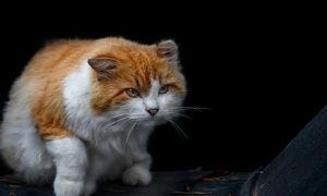 Какие антибиотики можно коту?