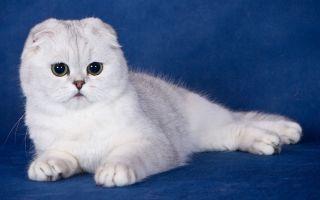 Какие бывают виды кошек?