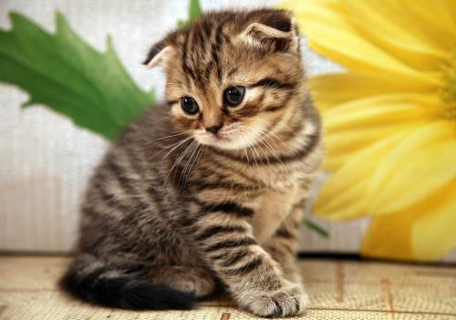 cat-kitten-pics