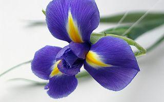 Какие цветы мужские?