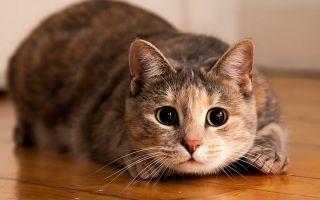Самые распространенные болезни кошек. Симптомы.