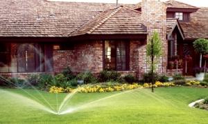 Правильный автополив – залог роскошного сада