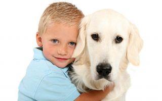 Какую собаку лучше завести дома?