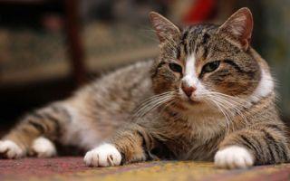Какие прививки нужны коту?