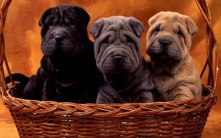 Какие собаки относятся к бойцовским?