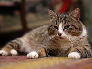 какие прививки нужны коту