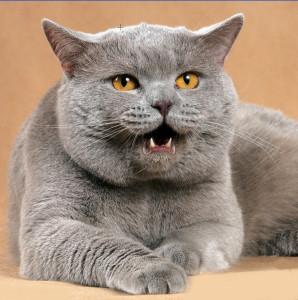 какое имя дать кошке?