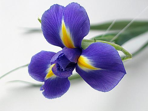 Цветы для мужчины. картинки