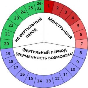 менструационный цикл