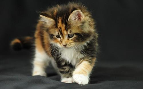 kitten-fluffy-photo-shoot-leaf-1920x1200